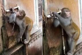वायरल वीडियो: बंदर की समझदारी ने किया सभी को हैरान