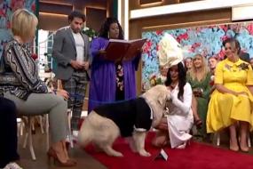 वायरल वीडियो: इसानों से उठा भरोसा, तो महिला ने की कुत्ते से शादी