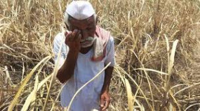 जनवरी से अब तक 610 किसानों ने की आत्महत्या, सावंत बोले - कर्जमाफी योजना फ्लॉप