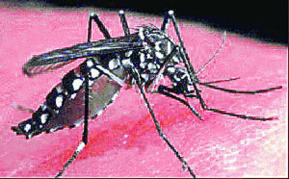 डेंगू का डंक :30 दिन में नागपुर शहर में 39 डेंगू पॉजिटिव ,62 हुए बीमार