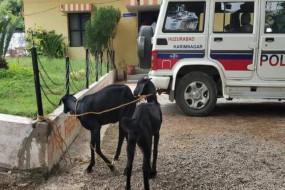 अजब-गजब: पुलिस ने किया बकरियों को गिरफ्तार, लगाया जुर्माना