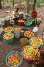 छत्तीसगढ़ का काजू और मुनगा अब वैश्विक बाजार में बनाएगा पैठ