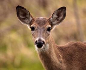 OMG : महिला को सिर पर लात मारकर भागा हिरण, देखें वीडियो