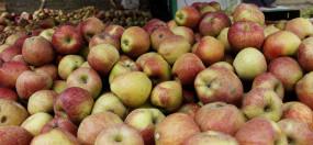 कश्मीर के किसानों के लिए अच्छी खबर, सेब के मिलेंगे बेहतर दाम