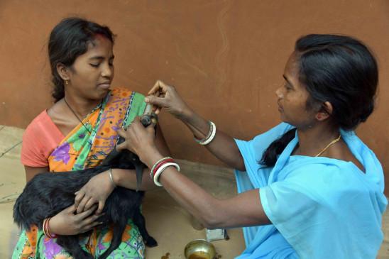 झारखंड में पशु-सखियां गांवों में कर रहीं गरीबी के मर्ज का इलाज!