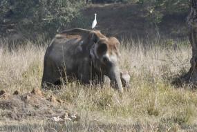 छत्तीसगढ़ में बनेगा लमेरु हाथी रिजर्व, रुकेगा हाथी-मानव के बीच का संघर्ष