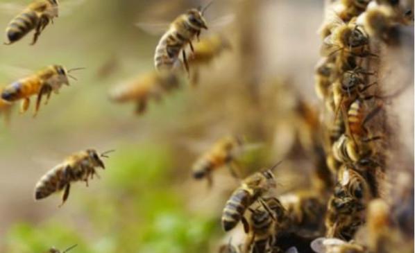UP: खेल प्रतियोगिता के दौरान मधुमक्खियों का हमला, 50 छात्राएं घायल
