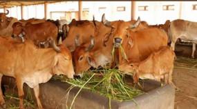 UP: लखनऊ नगर निगम गाय पालने वालों को दान करेगा गाय
