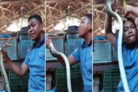 वायरल वीडियो: सांप को कर रहा था तंग, वीडियो देख आप भी रह जाएंगे दंग