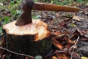 सुप्रीम कोर्ट के स्थगन से पहले आरे में कट चुके थे 2141 पेड़