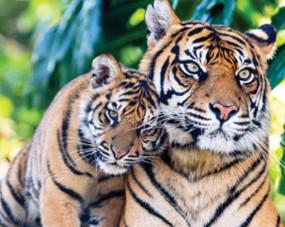बाघों और शावकों से समृद्ध हुआ नवेगांव व नागझिरा, बढ़ रहे टूरिस्ट