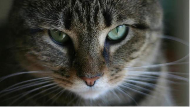 बिल्ली की हत्या करने वाले पर अदालतने लगाया 9,150 रुपए का जुर्माना