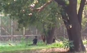 दिल्ली के चिड़ियाघर में फिर शेर के पिंजरे में गिरा युवक, उसके बाद क्या हुआ तमाशा?