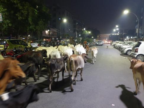 पशुगणना : देश में गधों की संख्या में भारी गिरावट, गायों की आबादी 18 फीसदी बढ़ी