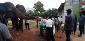 जंगल में काटा केक , धूमधाम से मनाया गया नन्हे हाथी 'विश्वा' का बर्थ डे