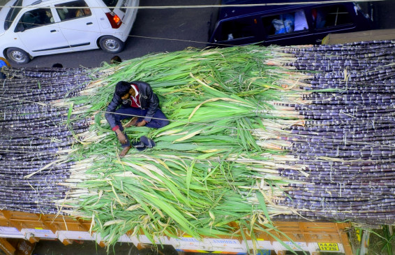 महाराष्ट्र में गन्ने के अभाव में 3 महीने से ज्यादा नहीं चलेगी पेराई