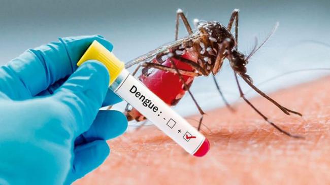 डेंगू का डंक : 209 मरीज पॉजिटिव, अब सतर्कता बरत रहा स्वास्थ्य विभाग