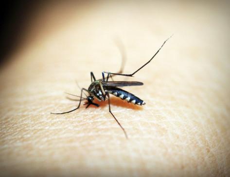 लखनऊ में डेंगू ने पसारे पांव, प्रमुख सचिव सहगल भी चपेट में
