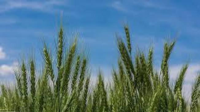 अपनी पसंद की खेती करने के लिए स्वतंत्र हैं किसान, हाईकोर्ट में सरकार की सफाई