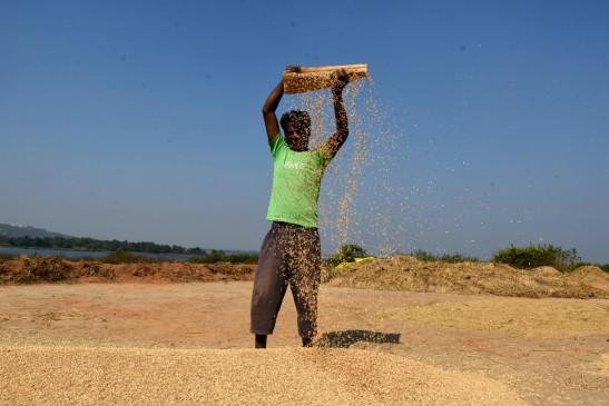 ऑप्शन ट्रेडिंग से किसानों को मिल सकता है फसलों का बेहतर दाम : विशेषज्ञ
