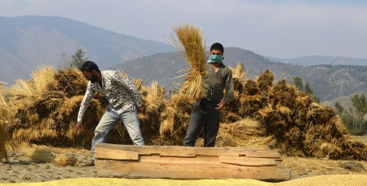 देश को आर्थिक मंदी से उबारने में किसान बनेंगे मददगार