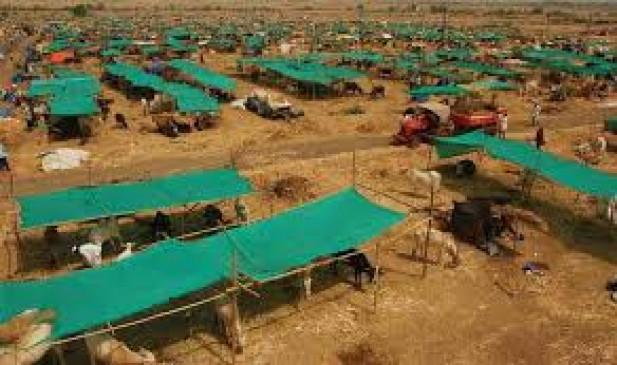 उस्मानाबाद में 21 अक्टूबर तक शुरु रहेगी चारा छावनी