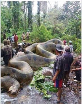 Fake News: 257 इंसानों को मार चुका है 135 फीट लंबा सांप ? जानें क्या है सच्चाई