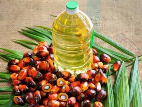 भारत ने रोकी पाम तेल की खरीदी, मलेशिया की बेचैनी बढ़ी