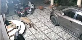 Fake News: कुत्ते पर तेंदुए ने किया हमला, वीडियो गलत दावे के साथ वायरल