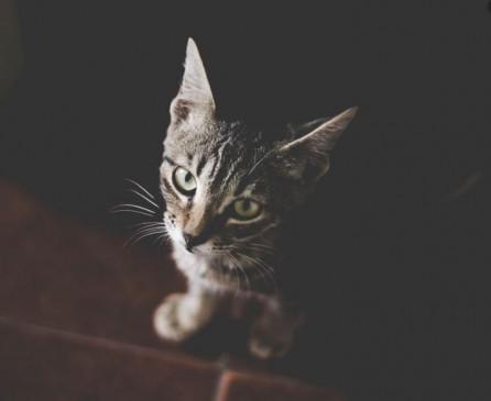 यदि आपने सपने में इस रंग की बिल्ली देखी है, तो हो जाइए सावधान