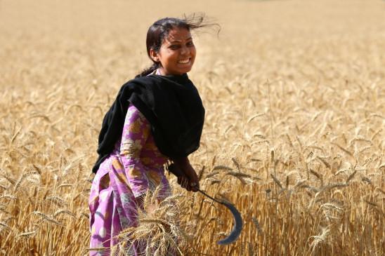 किसानों को मोदी सरकार का दिवाली गिफ्ट, रबी की फसलों पर बढ़ाया समर्थन मूल्य