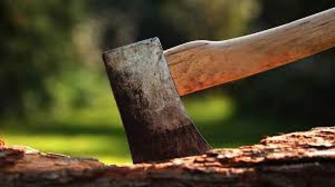 पांच साल में काटे गए एक करोड़ पेड़, जानिए किस प्रोजेक्ट के कितने काटे