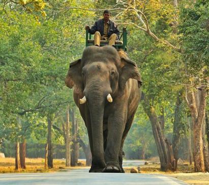 सूनी आंखों से महावत का इंतजार कर रहा सुंदर, बांधवगढ़ में महावत की मौत पर हाथी शोकग्रस्त