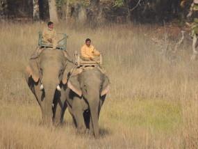 बफर जोन में पर्यटकों को मिल सकेगा हाथियों की ज्वॉय राइड का लुत्फ
