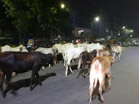 उप्र : फसल की रखवाली कर रहे किसान पर गायों का हमला, मौत