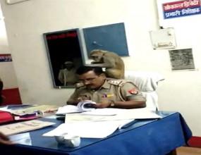 जब दरोगा के कंधे पर अचानक आकर बैठा बंदर, वीडियो में देखें फिर आगे क्या हुआ