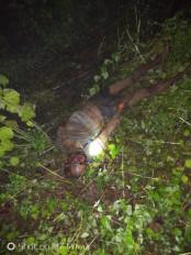 जंगली हांथी ने ग्रामीण को कुचला ,मौत - तीन दिन से डाले हैं डेरा