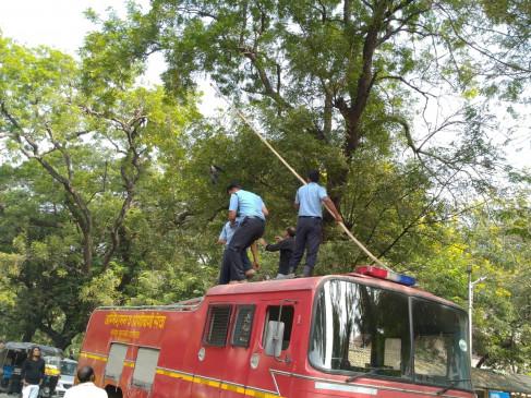 40 फीट ऊंचाई पर दो दिन से मांजे में फंसा था कौआ , अग्निशमन विभाग ने रेस्कयू निकाला