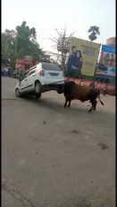 बिहार : हॉर्न बजने से गुस्साया सांड, पटक दी कार