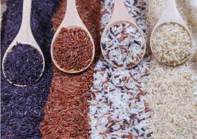 लोगों में बढ़ रहा सफेद, लाल, ब्राउन और ब्लैक राइस खाने का क्रेज, जानिए उनके बीच अंतर और फायदे