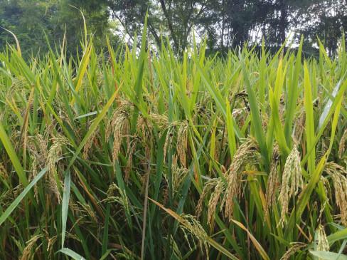 राहत को तरसे किसान, 10 करोड़ के मुआवजे की डिमांड