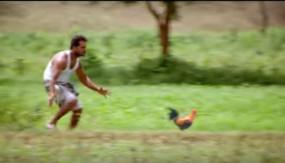 बस की छत पर रखी टोकरी से उड़ीं मुर्गियां, पकड़ने मची लूट