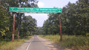 सड़कों पर घूम रहा जंगली हाथियों का झुंड - शाम को अस्थाई रूप से बंद रहेगा बांधवगढ़ मार्ग