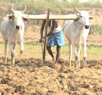 किसानों को 50 हजार रुपए प्रति हेक्टेयर दें, सरकार की घोषणा