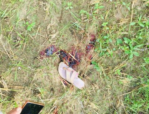 गोहपारू में तेंदुए का आतंक, महिला को निशााना बनाया - मौत