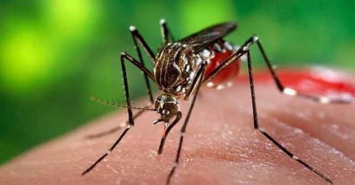 पाकिस्तान में बना डेंगू मामलों का नया रिकॉर्ड, 44 हजार मरीज आए सामने