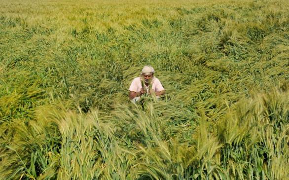 बारिश के कारण सुस्त पड़ी गेहूं, चना समेत ज्यादातर रबी फसलों की बुवाई