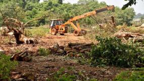 महाराष्ट्र: आरे में नहीं कटेगा अब एक भी पेड़,मेट्रो कार शेड प्रोजेक्ट पर सीएम ने लगाई रोक
