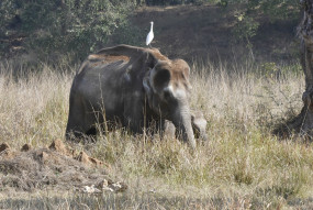 उत्तराखंड : हाथियों की तबाही रोकने रेडियो कॉलर का होगा प्रयोग