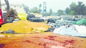 भंडारा में भीगा करोड़ों का धान , बेमौसम बारिश से हुआ भारी नुकसान